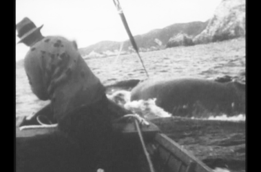 The lance being thrown from a whaleboat. Note how close the whale is, and the trajectory of the lance. Also the whaleline, attached to the harpoon, leading over the starboard bow. The lance was repeatedly thrown into the whale. These are unique whaling photos. Photo: Stacy Woodard 1933.