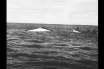 Chasing the White Whale.  Photo: Stacy Woodard 1933