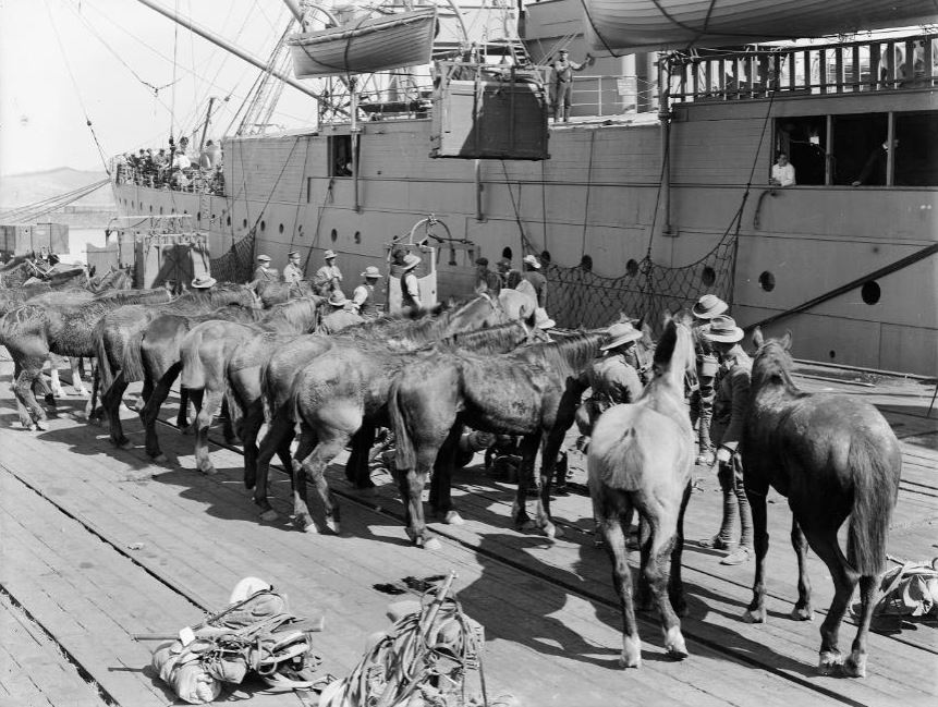 Horses being readied for departure by ship during World War One. The Press (Newspaper): Negatives. Ref: 1/1-017739-G. Alexander Turnbull Library, Wellington, New Zealand. http://natlib.govt.nz/records/23086666